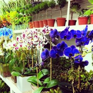 Reger Orchids 2